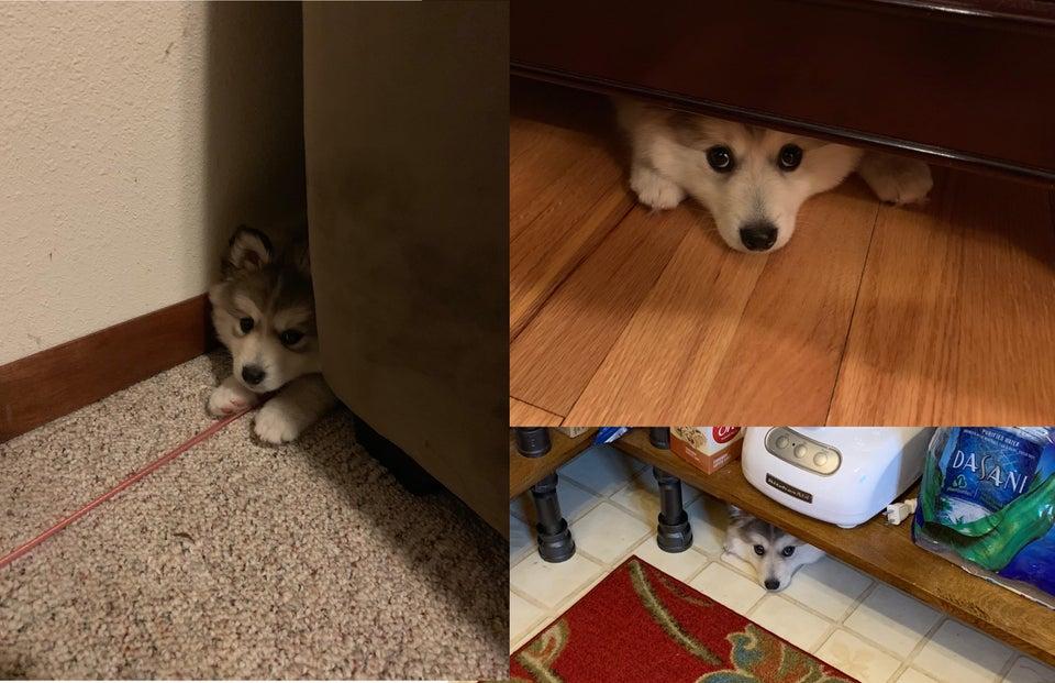 perro timido