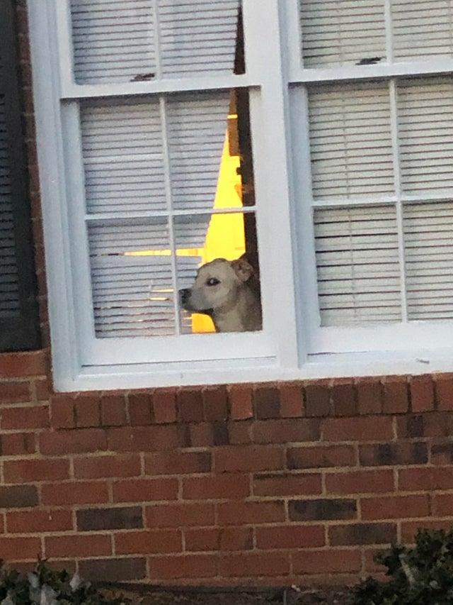 perro ventana juzgando