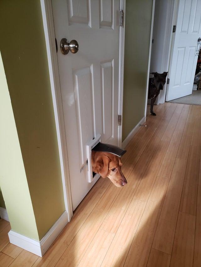 perro en la gatera