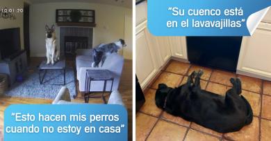 perros-situaciones-complicadas