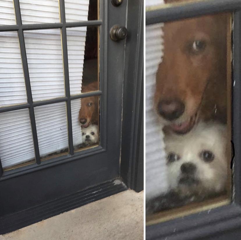 perros ventana