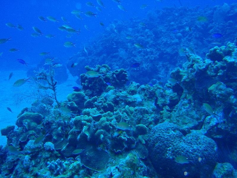granjas de algas en Belice