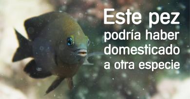 pez-domestica-camarones