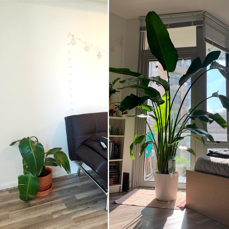 planta revivida 4