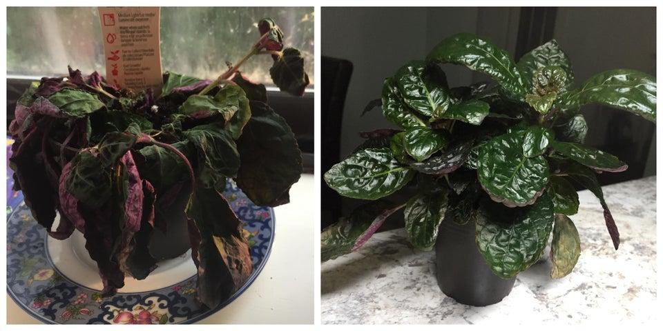 planta revivida 5