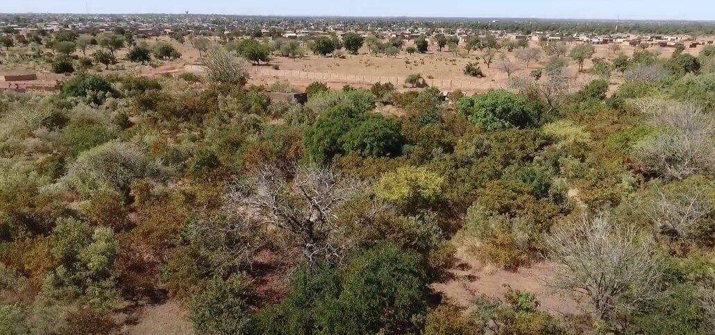 zona boscosa en el desierto