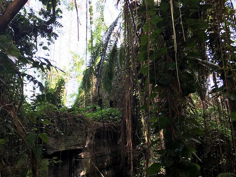 hábitats y plantas en biosfera 2