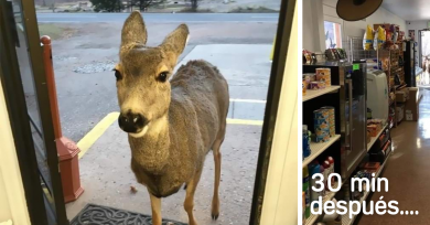 ciervo-tienda