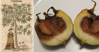 fruta-medieval-podrida