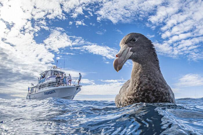 ave marina y barco