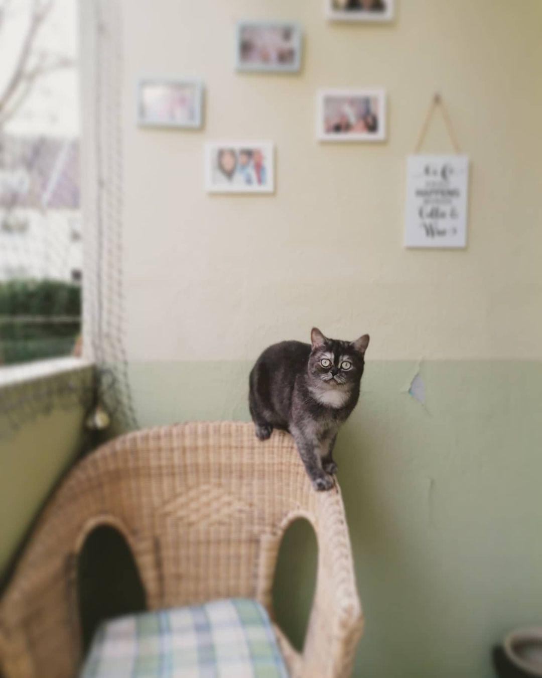 gato en silla