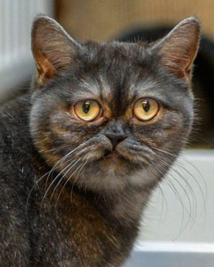 gato abandonado y rescatado
