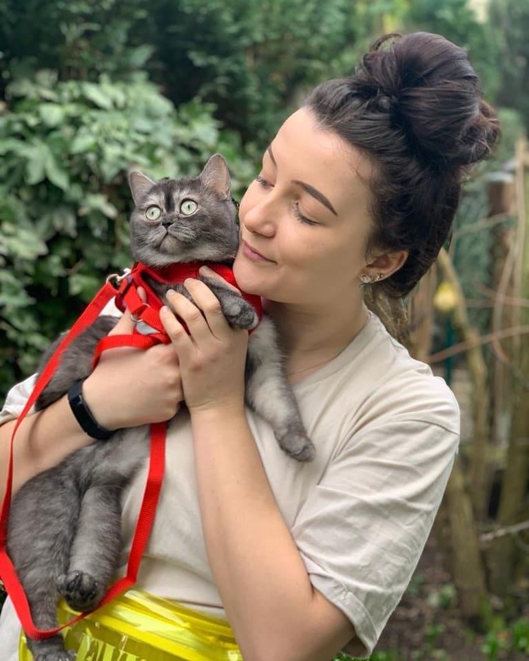 historia de rescate de gato