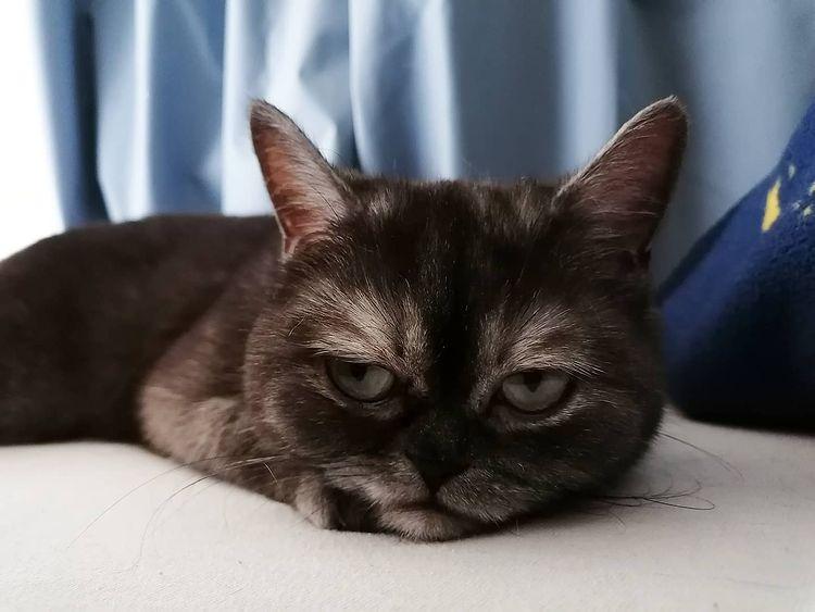 mirada de gato gruñón