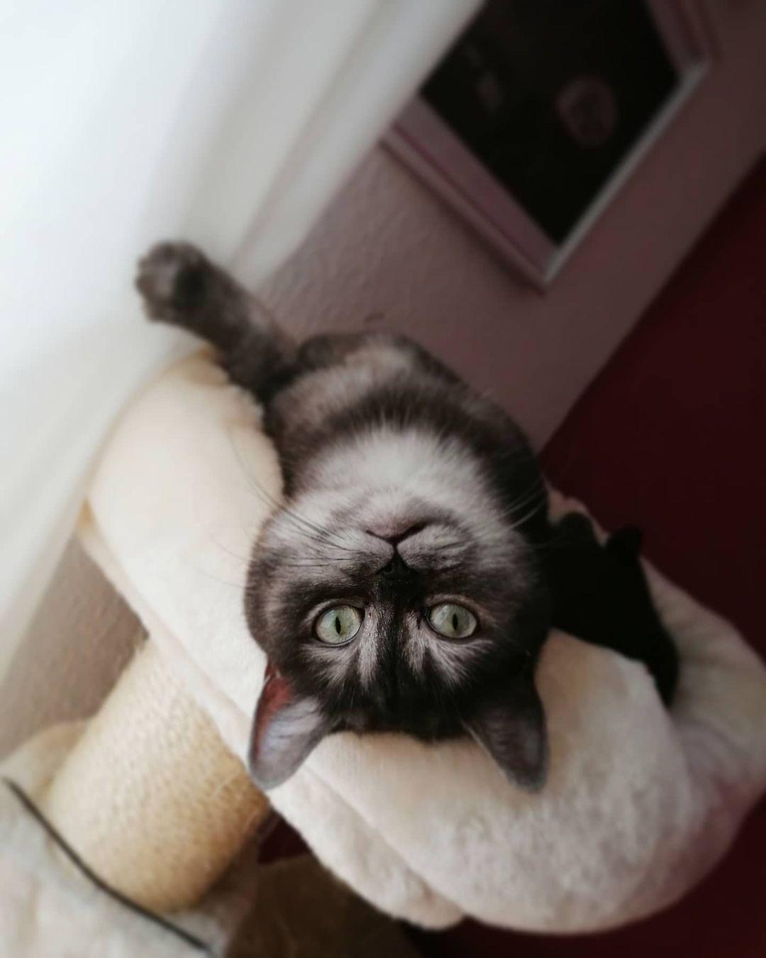 gato boca abajo