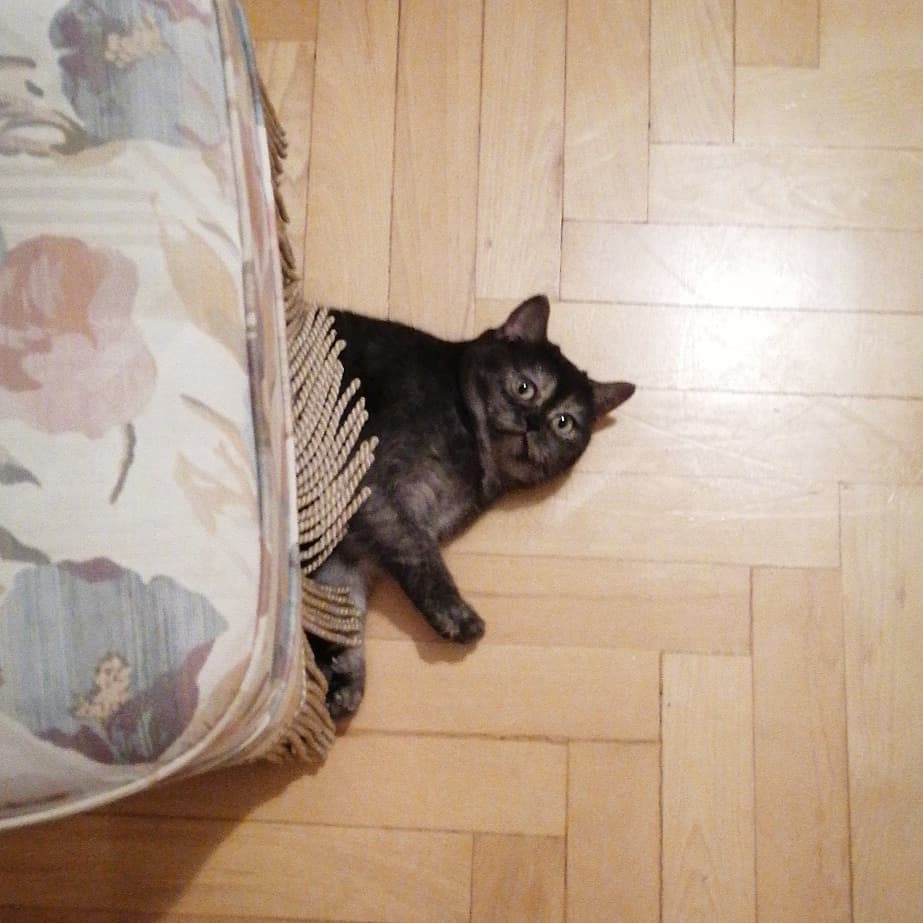 gato debajo de la cama