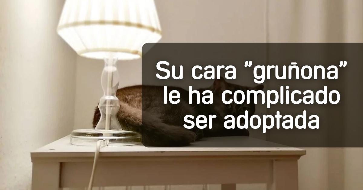 gato-grunon