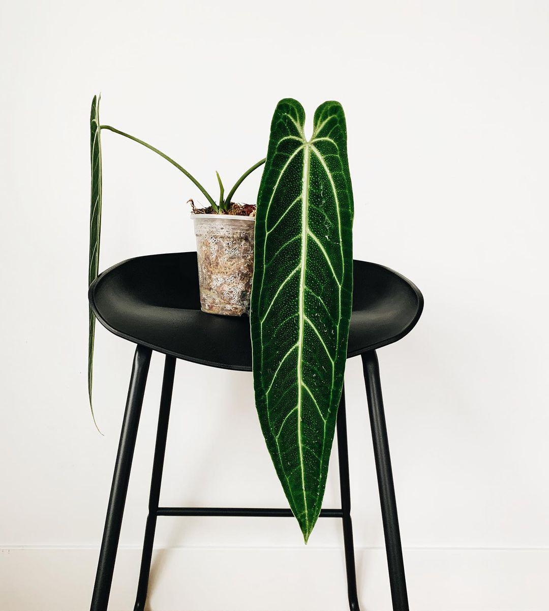 plantas más deseadas del mundo