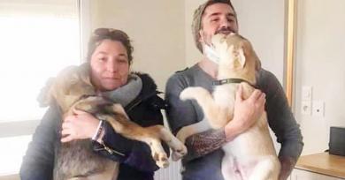 perritos-adoptados