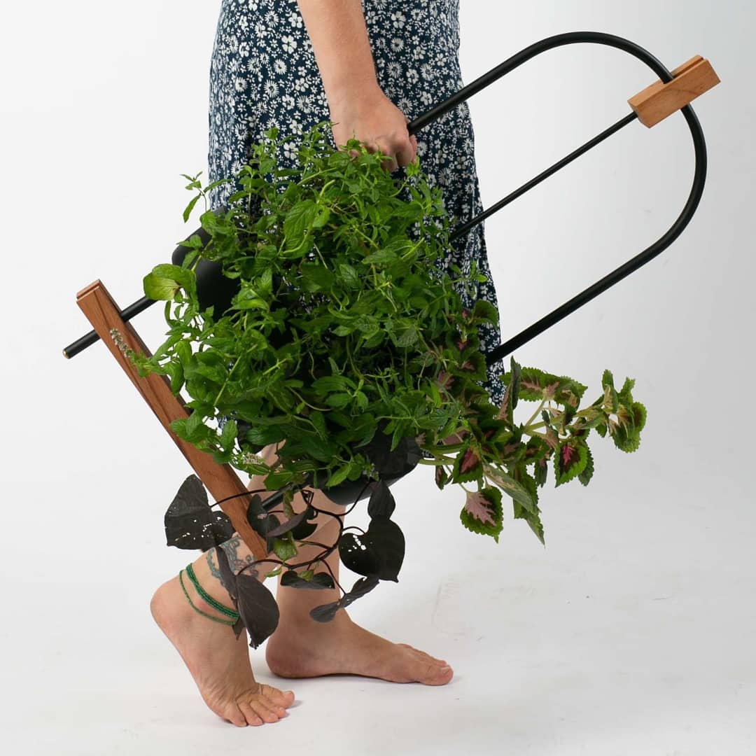 planta invento