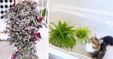 plantas-dificiles-de-cuidar
