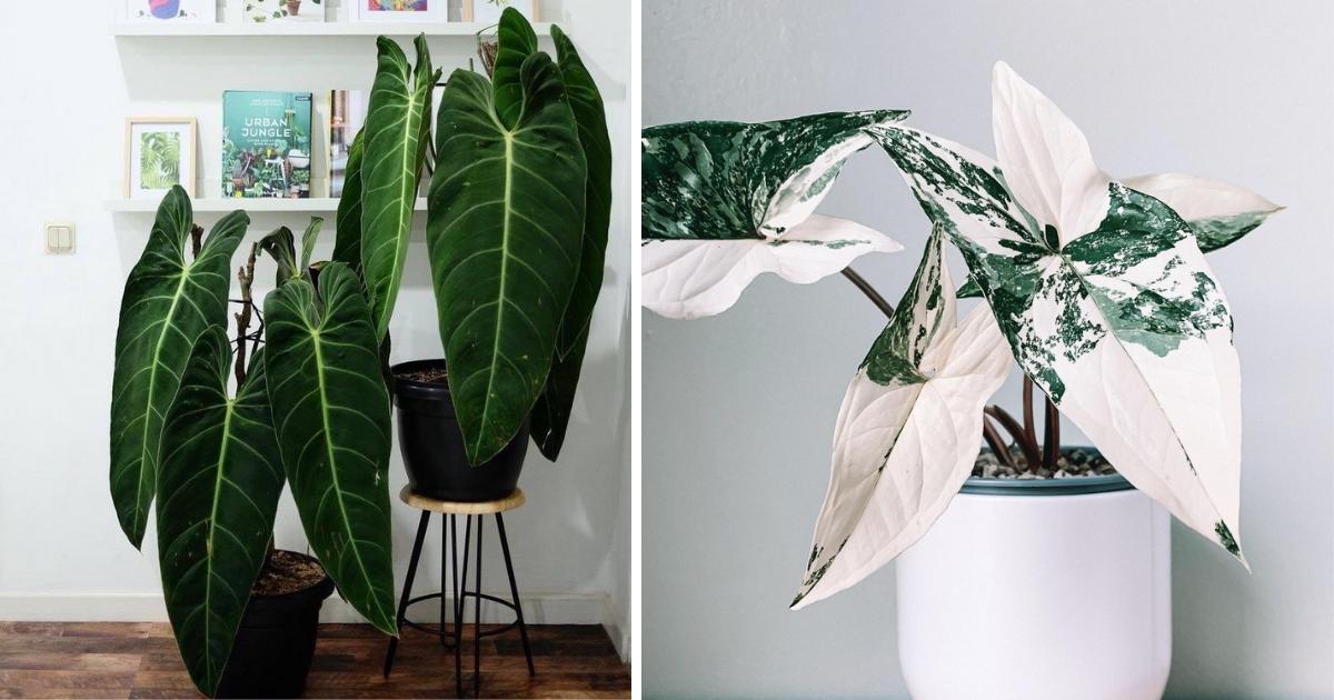 plantas-interior-raras