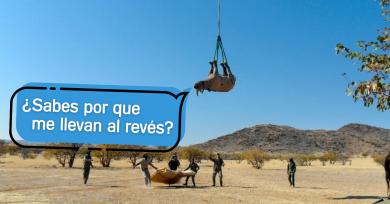 rinoceronte-al-reves