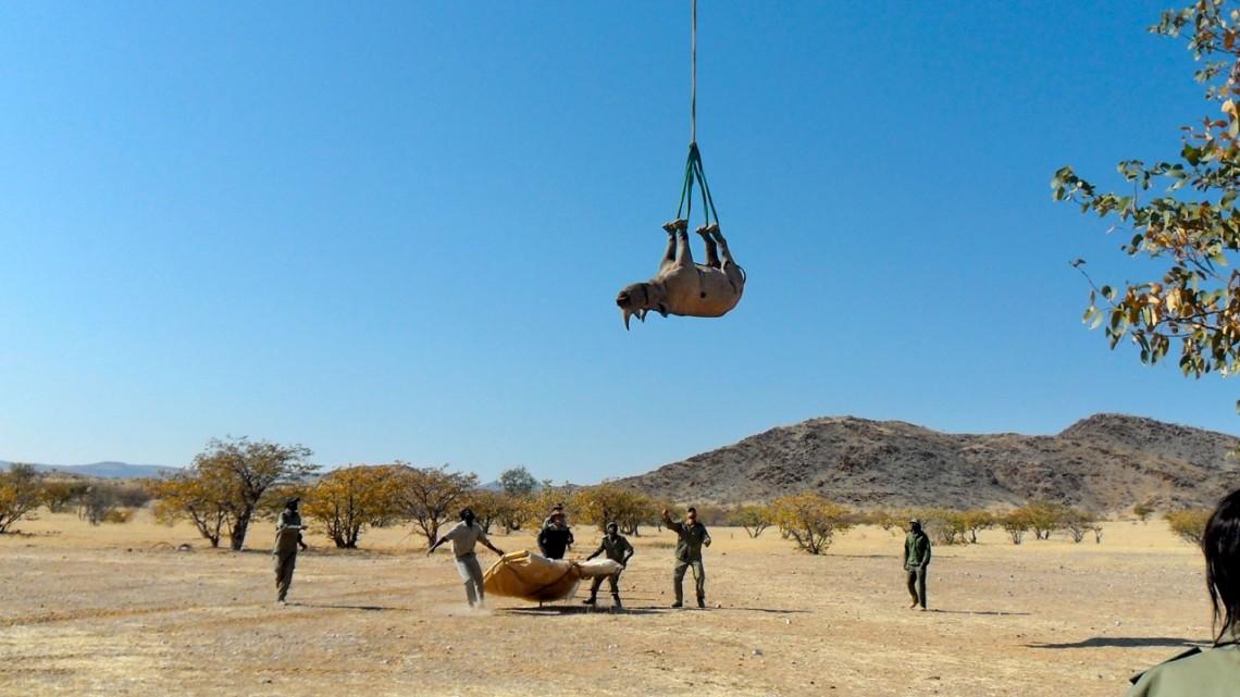 trasladado de rinoceronte en helicóptero