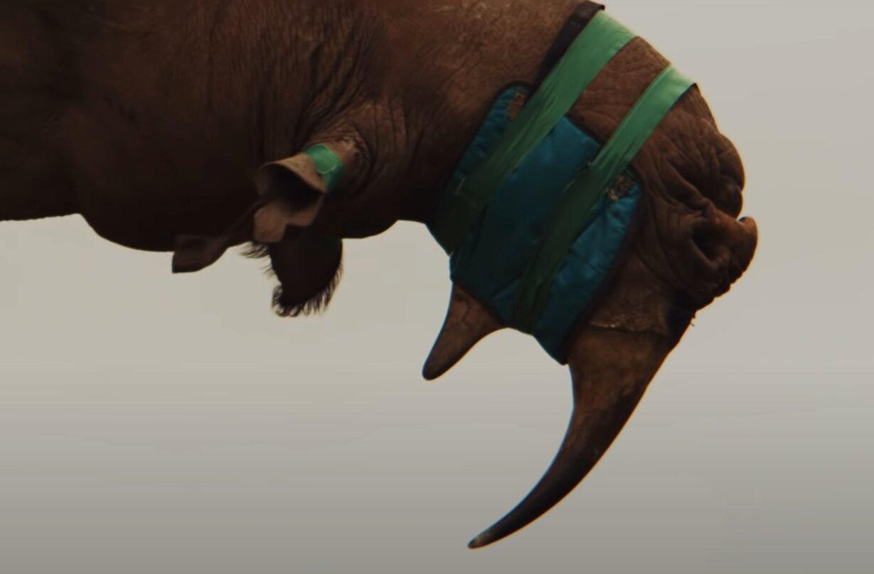 transporte de rinoceronte negro