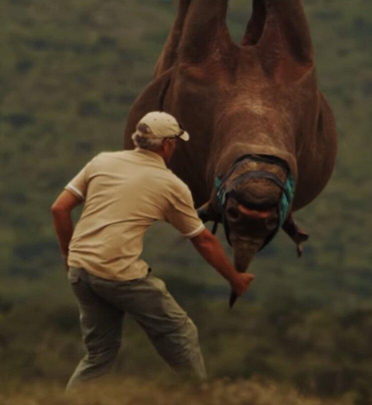 maniobra conservación del rinoceronte negro