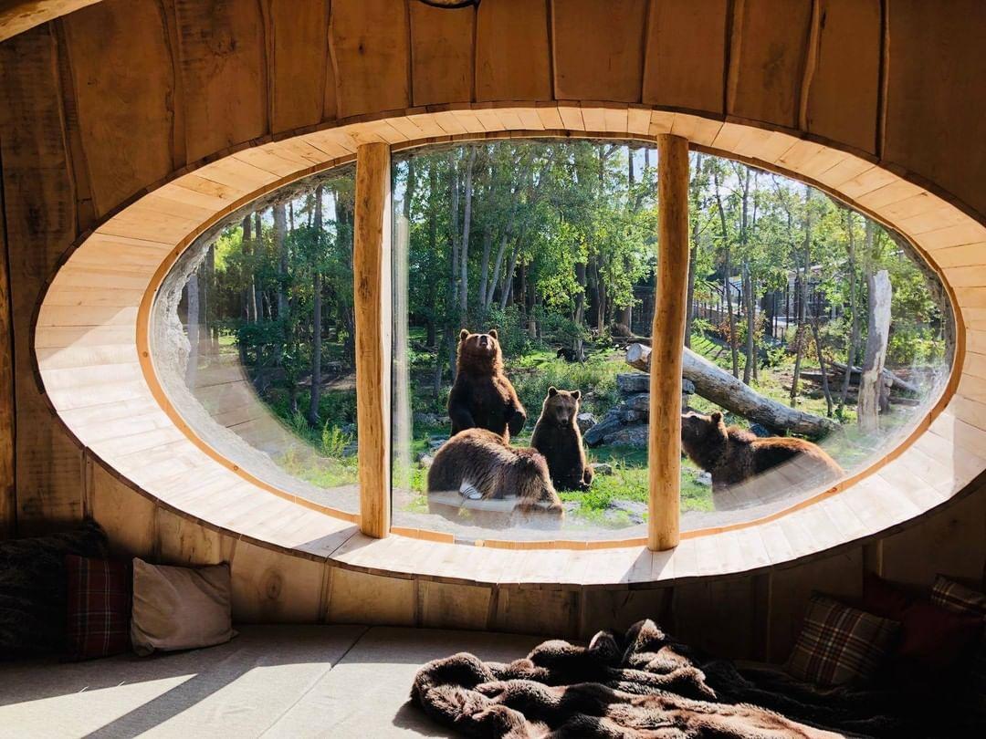 osos a través de la ventana