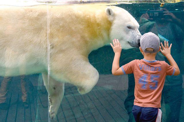 niño con oso polar