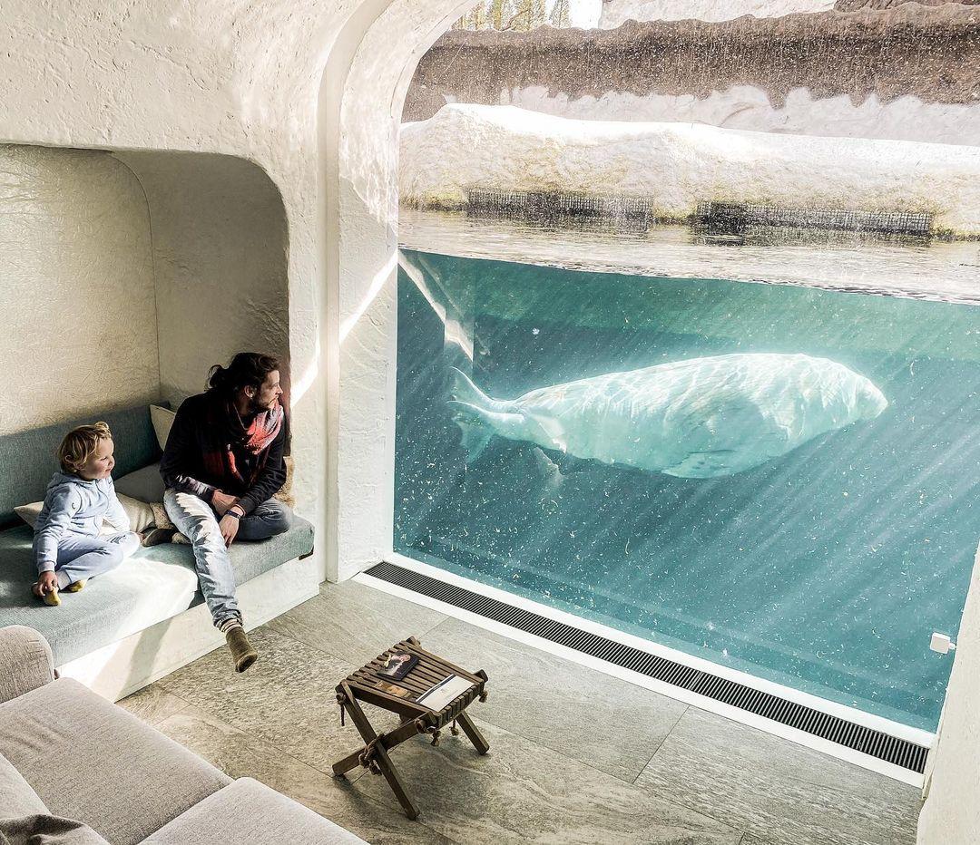 viendo león marino desde la habitación