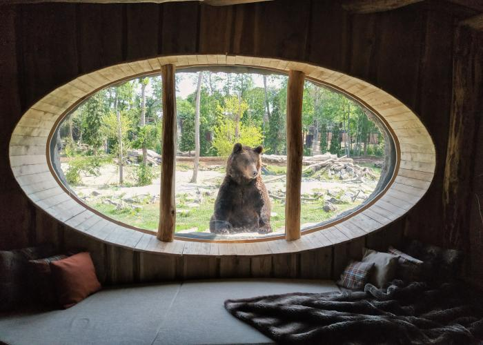 oso asomándose por la ventana