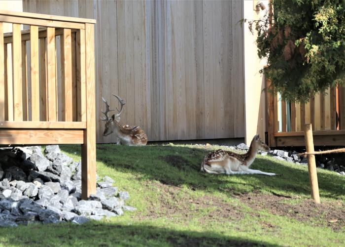 ciervos en el zoo Pairi Daiza