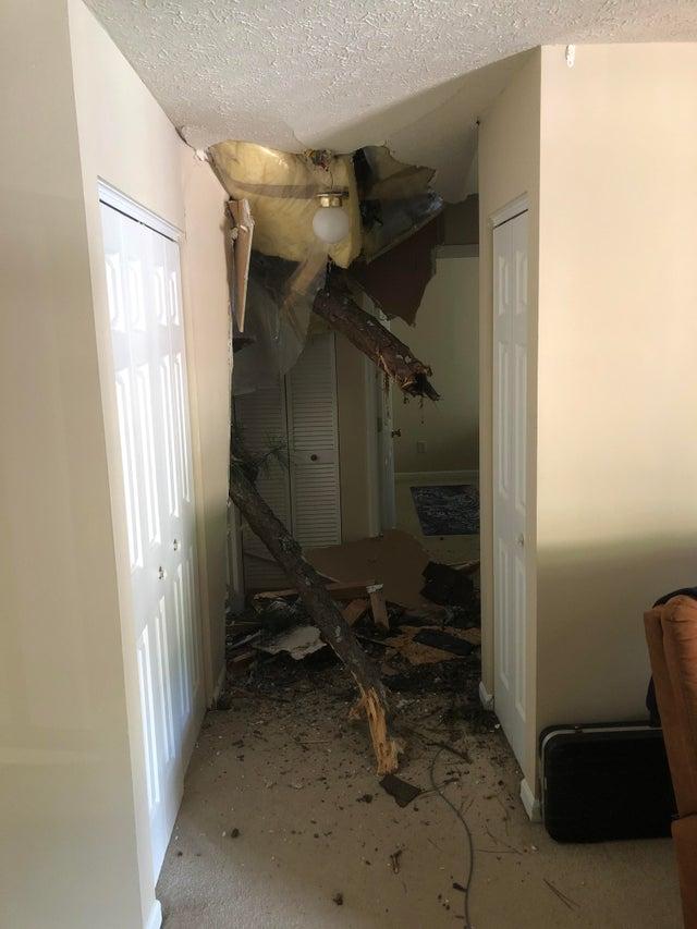 árbol cae en apartamento