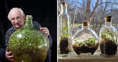 botella-plantas