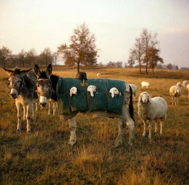 burros niñera