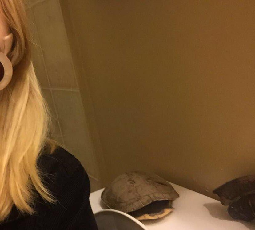 caparazón en el baño