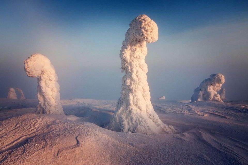 Finlandia árboles nevados