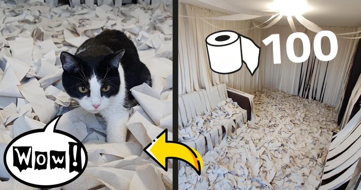 gato-habitacion-papel-higienico