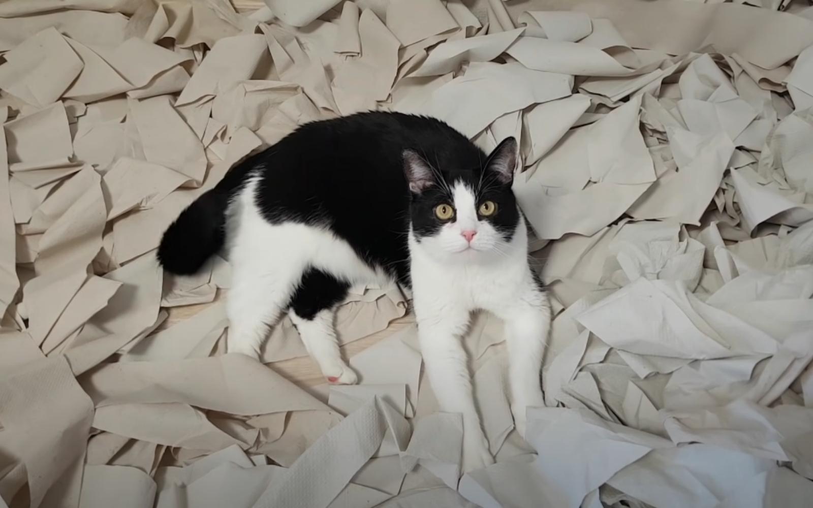 gato en cama de papel higiénico