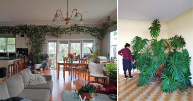 plantas-casas-interior