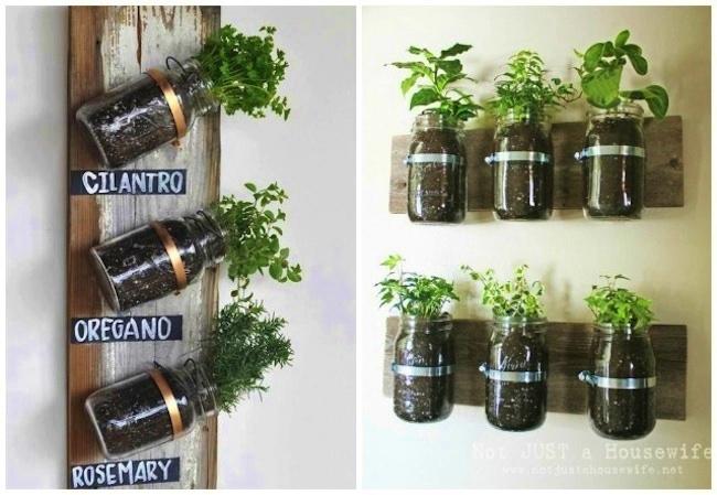 plantas aromáticas en tarros