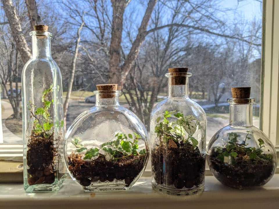 plantas en botellas cerradas