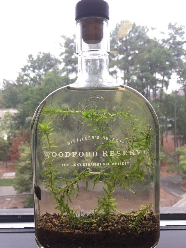 planta dentro de botella