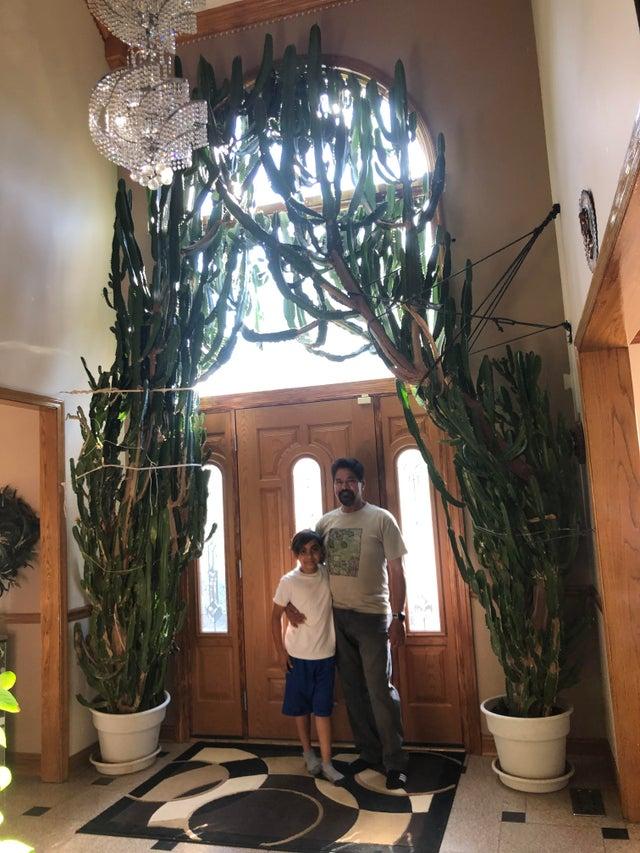 planta gigante en entrada de casa