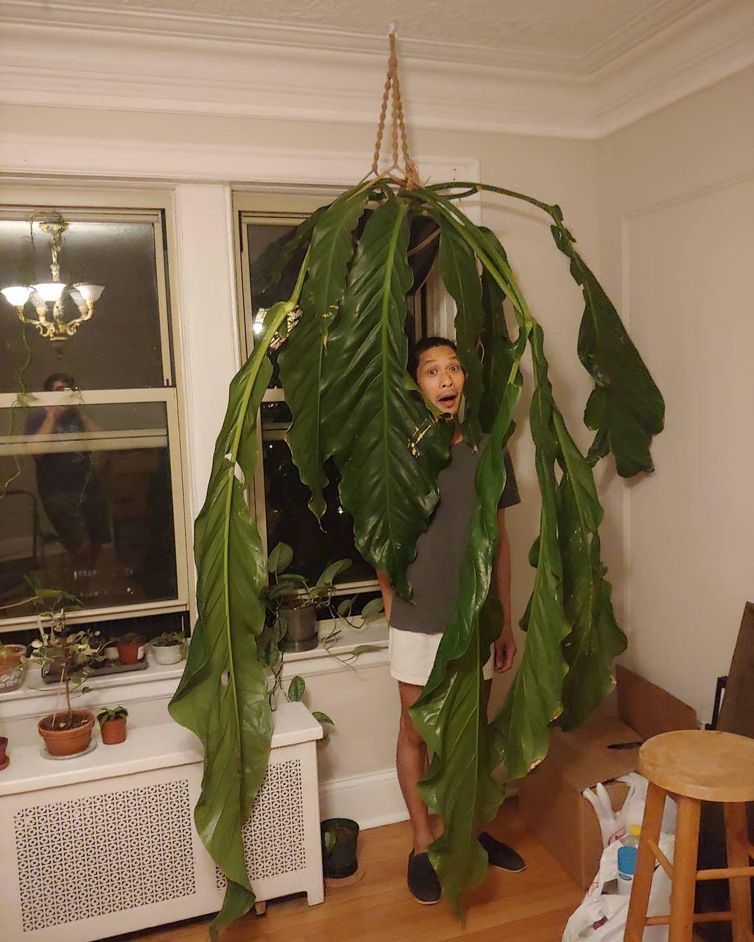 planta gigante