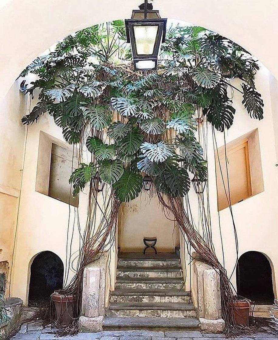 planta en escalera de entrada