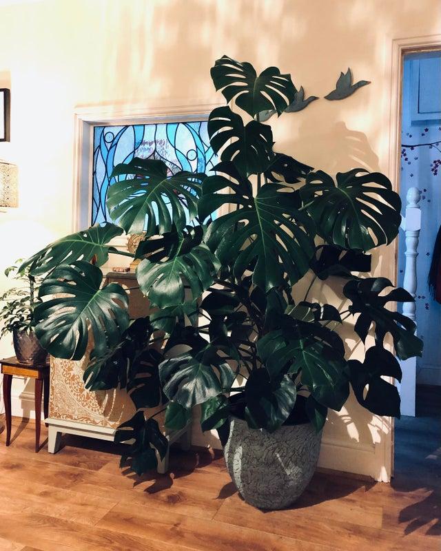 plantas enormes